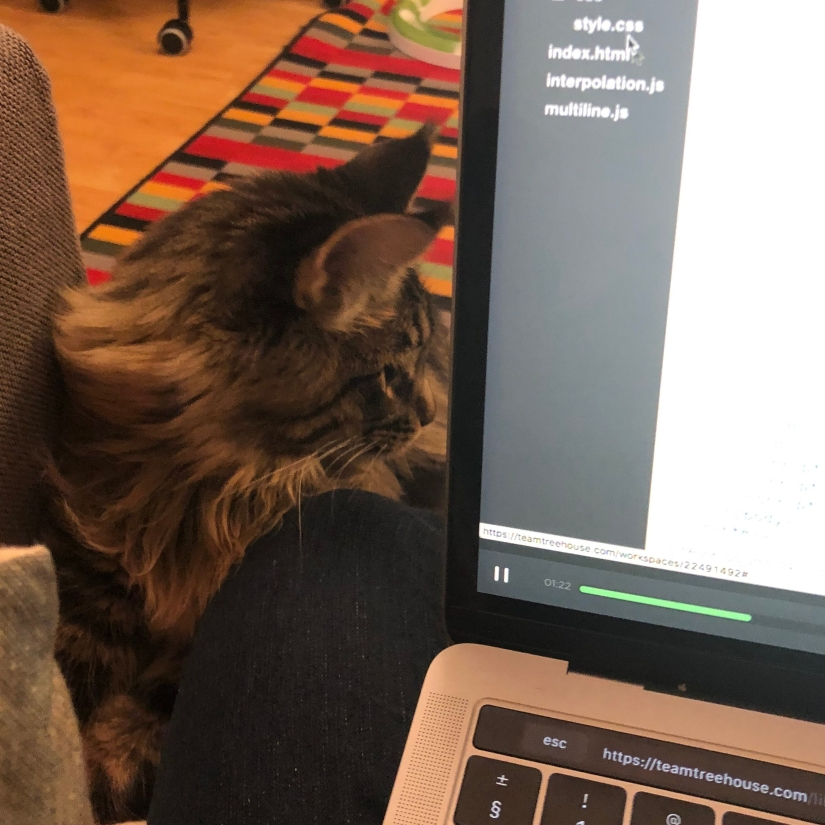 Photo of a cat perching on the sofa, next to a laptop with a Javascript course on its screen